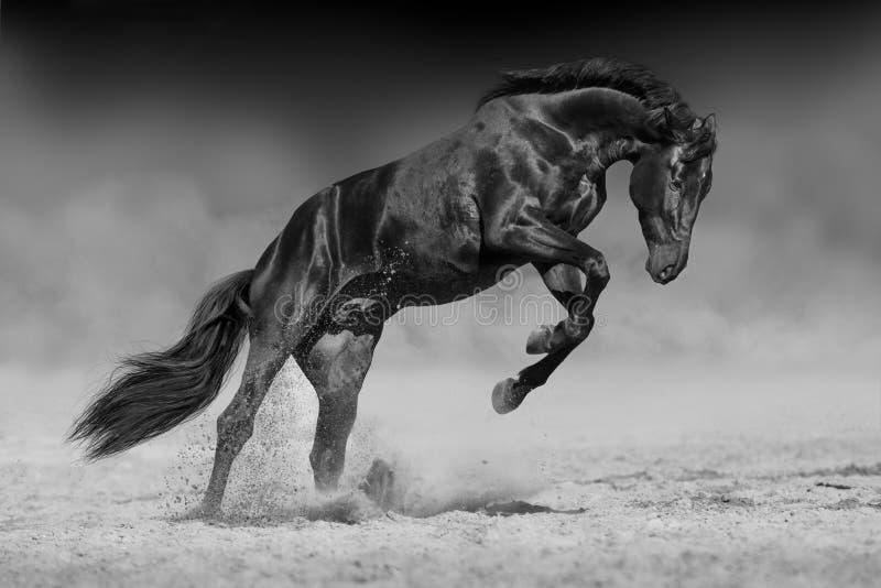 Zwart paard in motie stock foto's