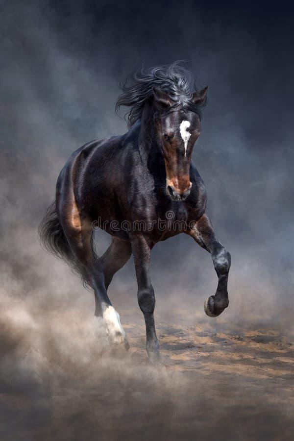 Zwart paard in stof stock afbeeldingen