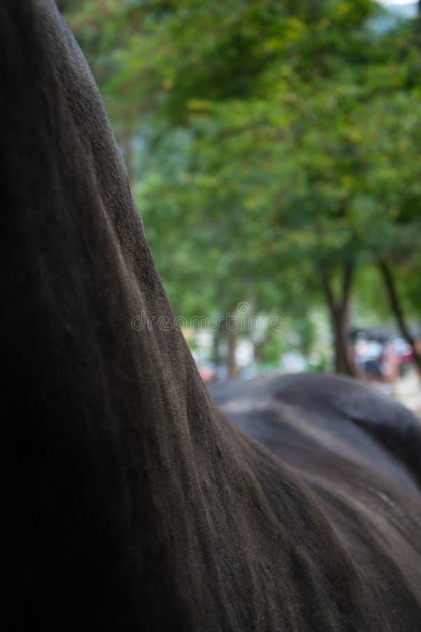 Zwart paard terug bij dierentuin royalty-vrije stock foto's