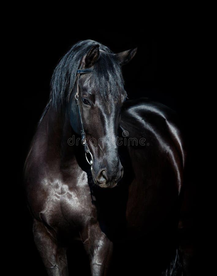 Zwart paardhoofd dat op zwarte wordt geïsoleerd royalty-vrije stock afbeeldingen