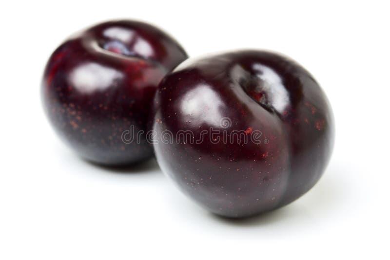 Zwart pruimfruit stock fotografie