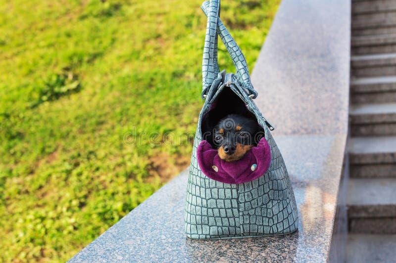 Zwart Russisch Terrier die in grijze hond dragende zak zitten royalty-vrije stock foto's