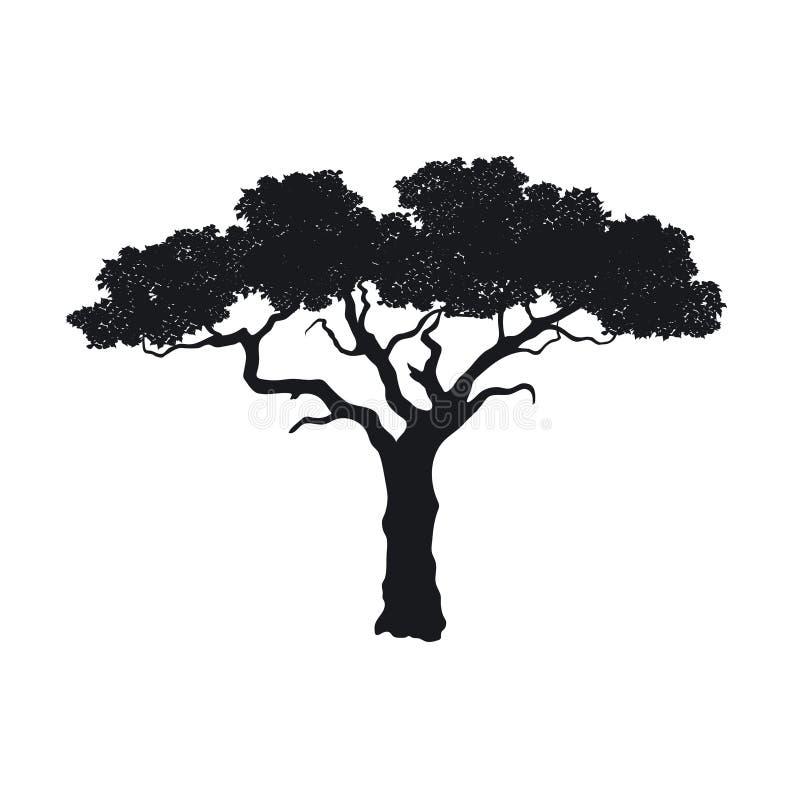 Zwart silhouet van Afrikaanse boom Geïsoleerd beeld van savanneaard Boslandschap van Afrika acaciapictogram vector illustratie