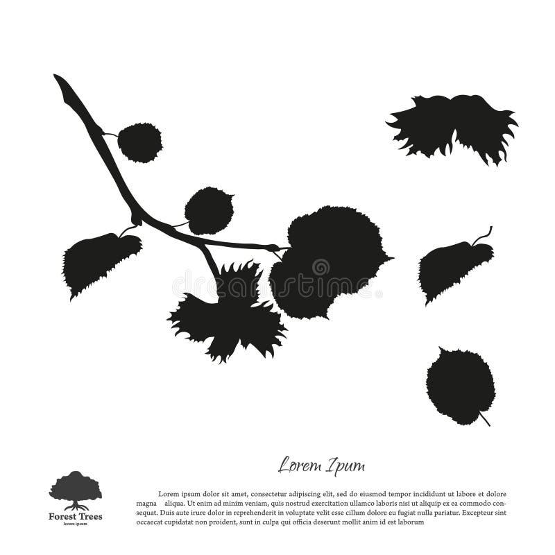 Zwart silhouet van takken van hazelnoten op een witte achtergrond stock illustratie