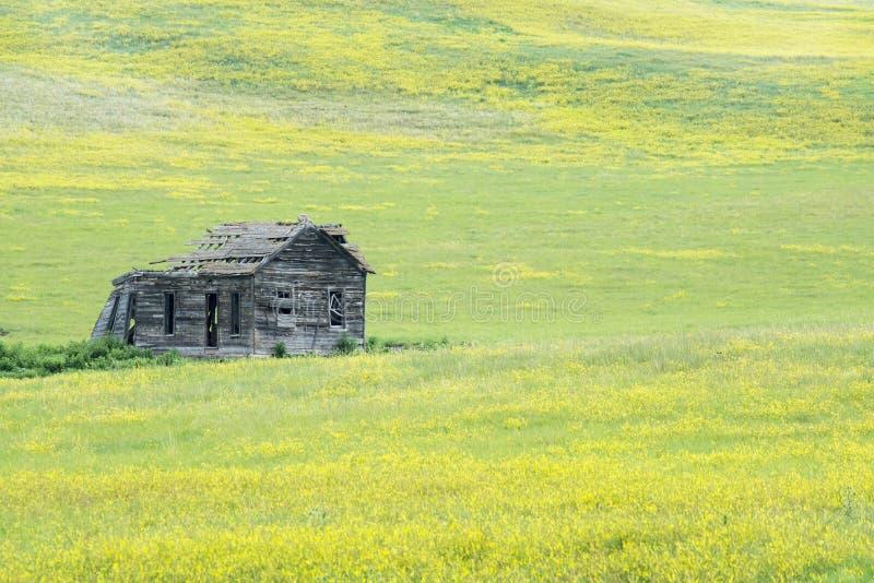 Zwart Van Zuid- heuvels Dakota royalty-vrije stock foto's