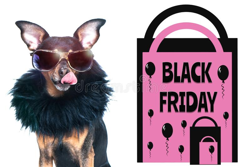 Zwart vrijdagconcept, foto en illustratie, modieuze die hond met glazen, naast de pakketten en de inschrijving worden gelikt stock foto's