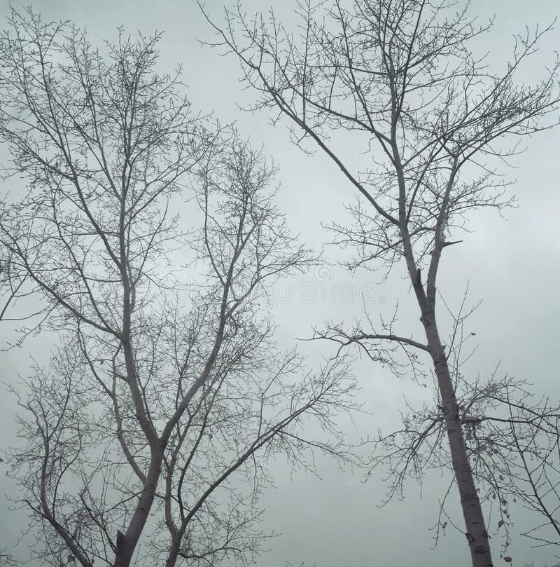 Zwart-wit beeld van naakte bomen tegen een bewolkte hemel in de recente herfst Knippend inbegrepen weg stock foto