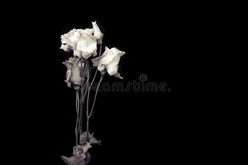 Zwart-wit bloemen royalty-vrije stock foto's