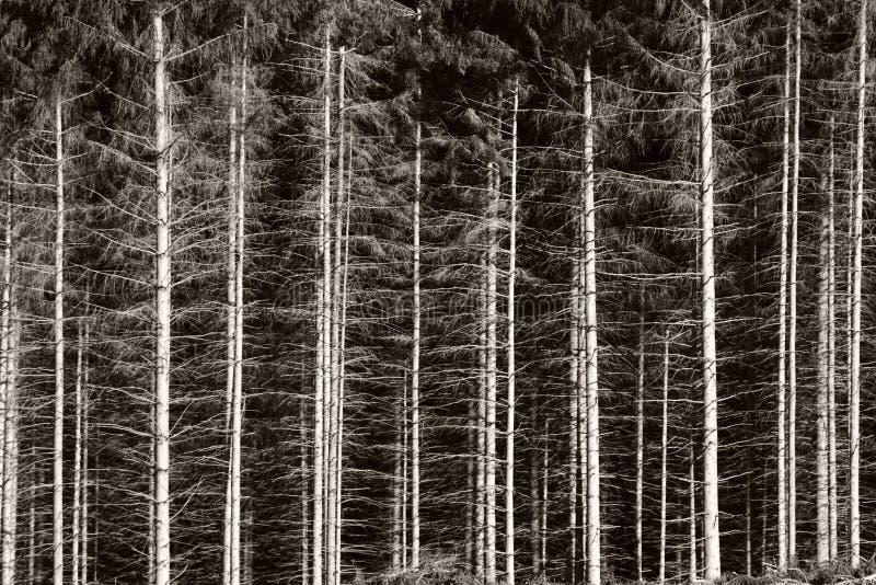 Zwart-wit bos royalty-vrije stock afbeelding