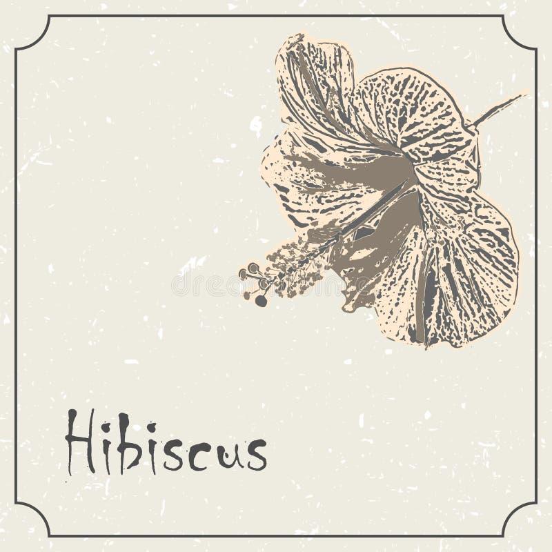 Zwart-wit de hibiscusbloem van Hawaï Uitstekend het ontwerpmalplaatje van het grungehuwelijk, bloemenkunstwerk Vector illustratie royalty-vrije illustratie