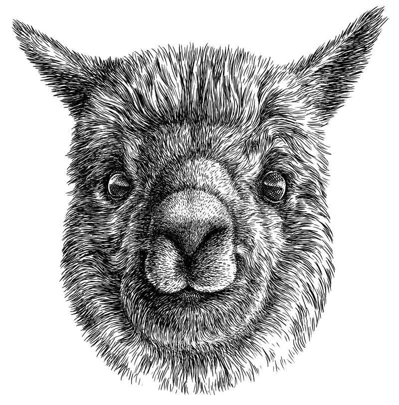 Zwart-wit graveer geïsoleerde Lamaillustratie royalty-vrije illustratie