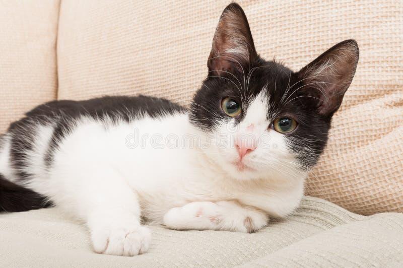 Zwart-wit kat of huisdier stock foto's