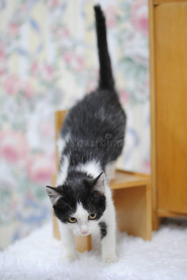 Zwart-wit katje die op een stuk speelgoed houten meubilair beklimmen royalty-vrije stock foto's