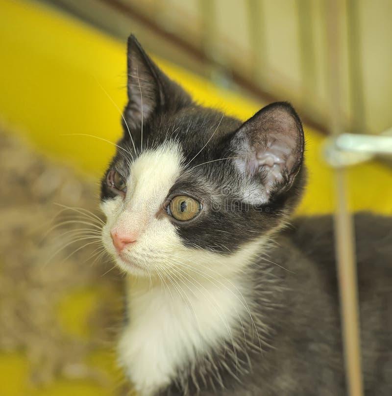 Zwart-wit katje in een kooi bij de schuilplaats stock foto's