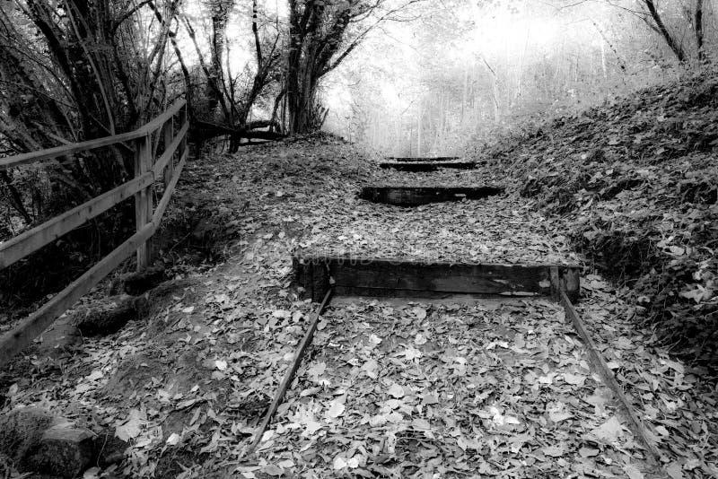 Zwart-wit landschap, één mooie de herfstdag royalty-vrije stock foto's
