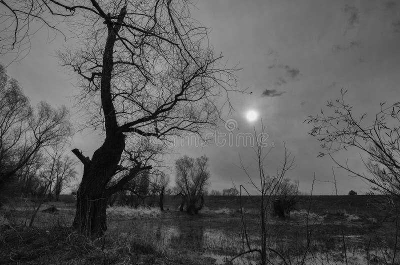 Zwart-wit landschap die oud griezelig bos en moeras tonen royalty-vrije stock afbeelding