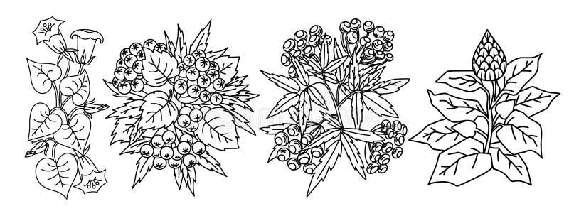 Zwart-wit met gebladerte en bloemen royalty-vrije illustratie