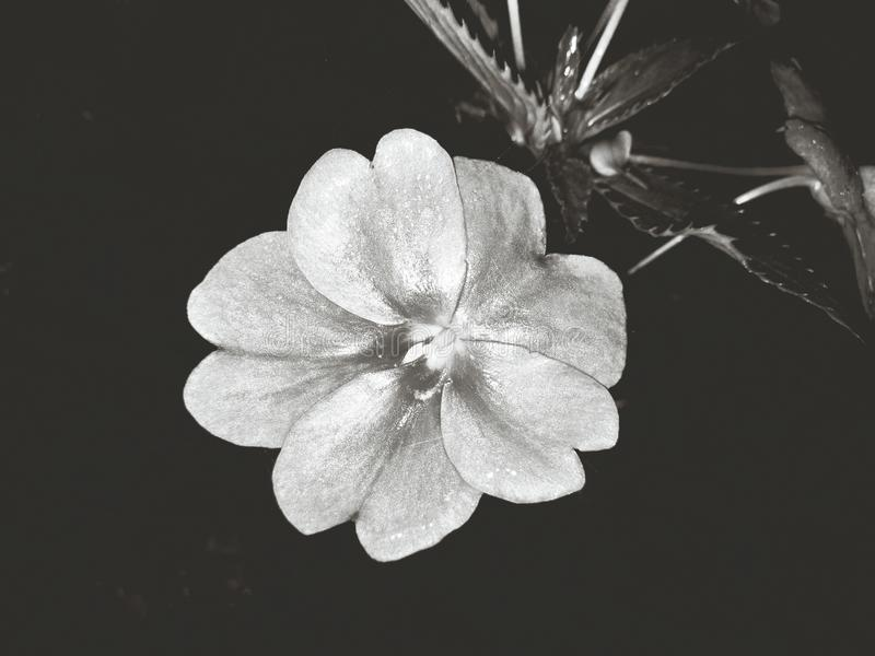 Zwart-wit nam toe stock foto's
