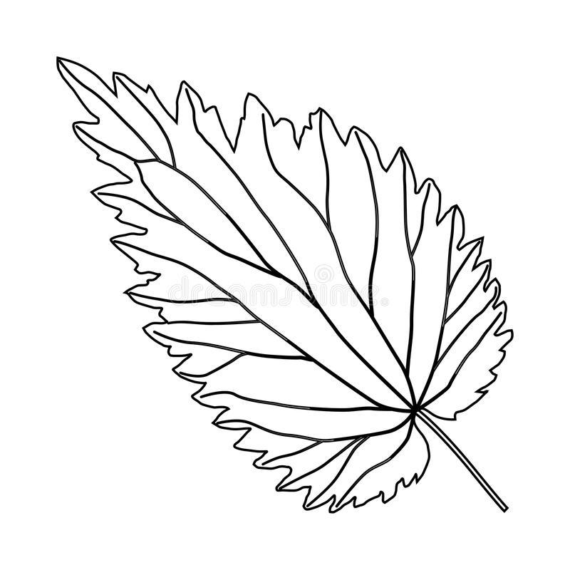 Zwart-wit netelblad 2