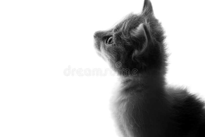 Zwart-wit portret van een weinig speels katje royalty-vrije stock afbeelding