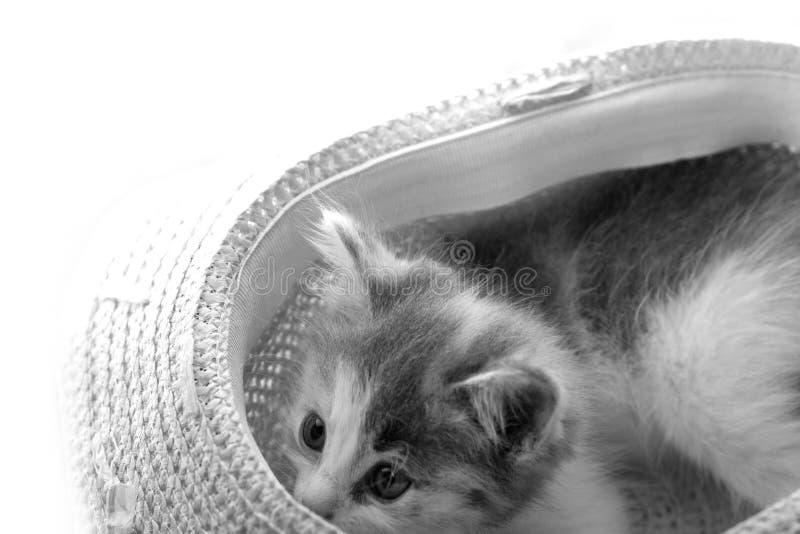 Zwart-wit portret van speelse pot in hoed stock foto's