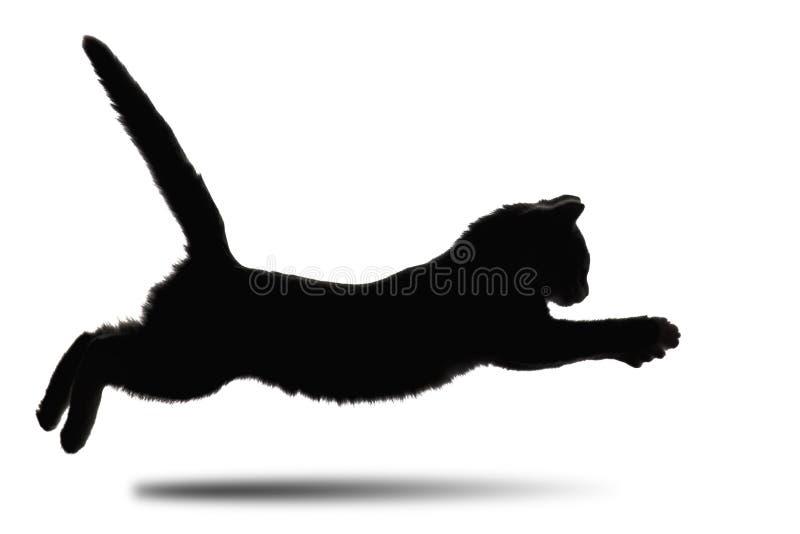 zwart-wit silhouet die van katje vooruit op wit geïsoleerde achtergrond lopen stock foto's