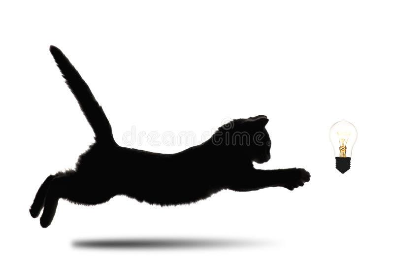 Zwart-wit silhouet die van weinig katje vooruit aan gloeiende gloeilamp op wit geïsoleerde achtergrond, conceptenwinde lopen royalty-vrije stock afbeelding