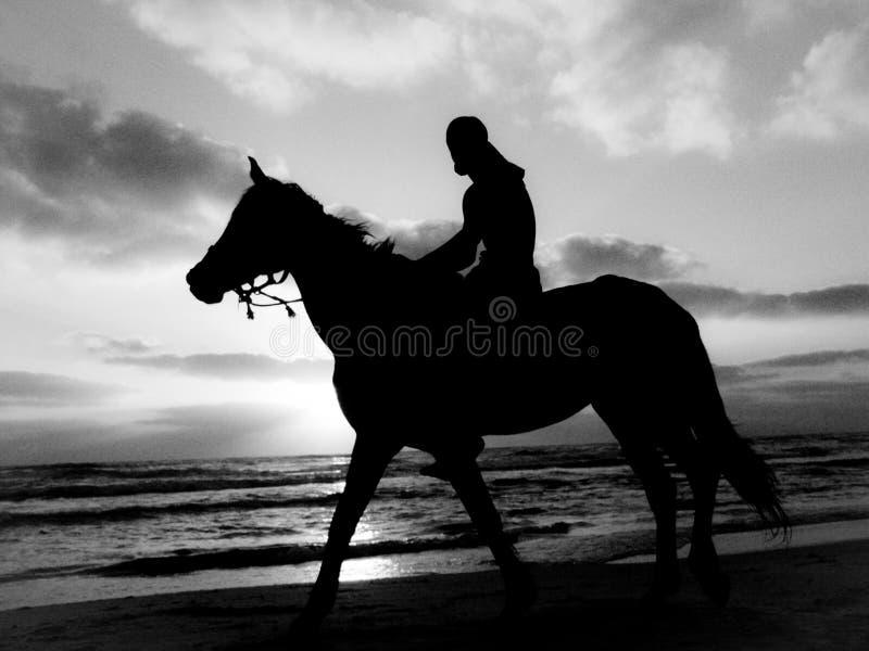 Zwart-wit silhouet van een personenvervoer een paard op een zandig strand onder een bewolkte hemel tijdens zonsondergang royalty-vrije stock foto