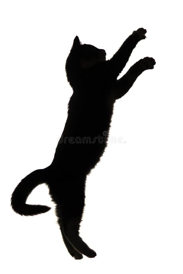 zwart-wit silhouet van katje die naar omhoog op wit geïsoleerde achtergrond springen royalty-vrije stock foto's
