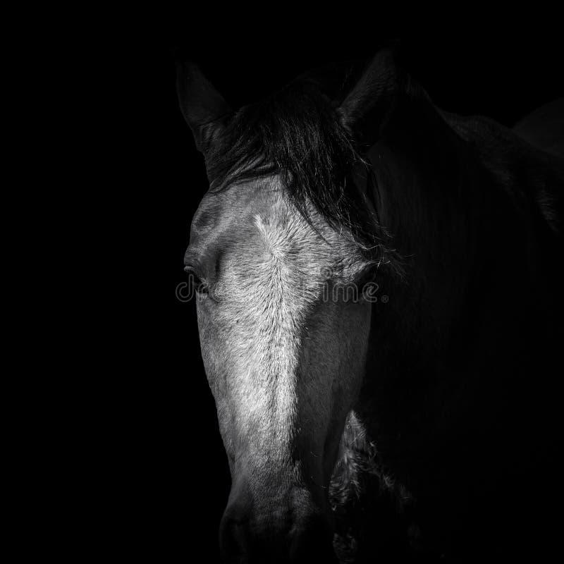 Zwart-wit van Geïsoleerd bruin paardhoofd stock afbeeldingen