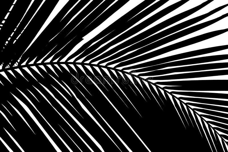 Zwart-witte abstracte achtergrond van palmenblad stock afbeelding