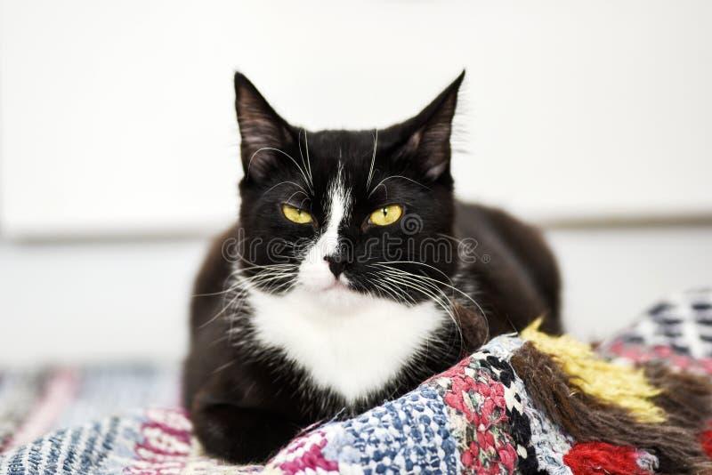 Zwart-witte binnenlandse kat, thuis het liggen, het ontspannen en rust royalty-vrije stock afbeeldingen
