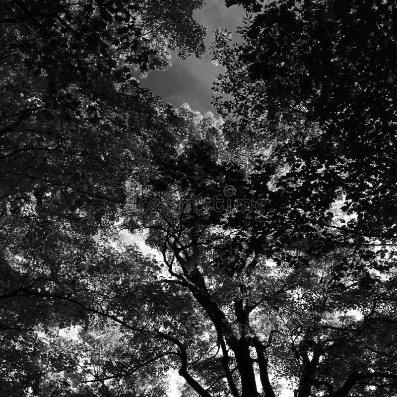 Zwart-witte bladeren stock foto