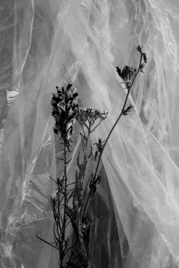 Zwart-witte bloemen royalty-vrije stock foto
