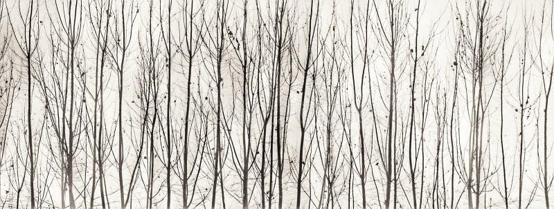 Zwart-witte bomenkunst stock afbeeldingen