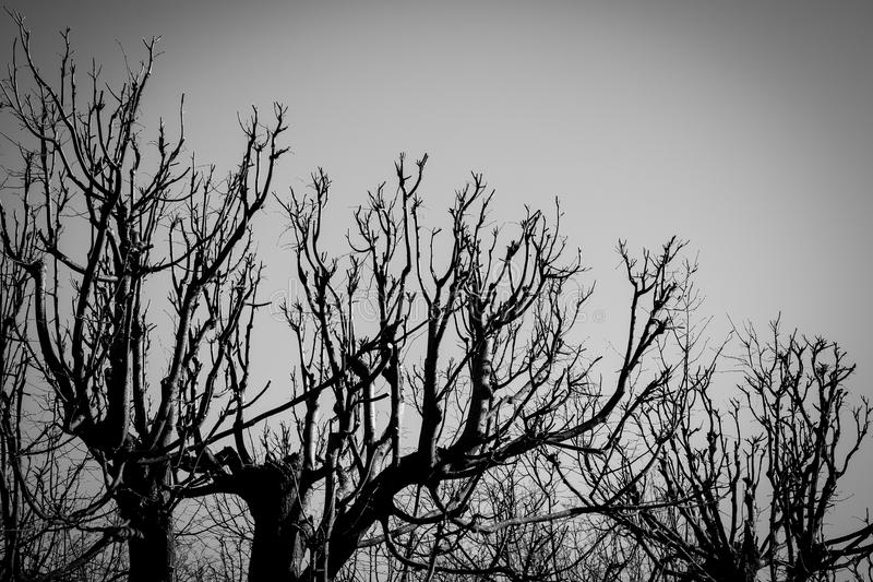 Zwart-witte bomensilhouetten royalty-vrije stock fotografie
