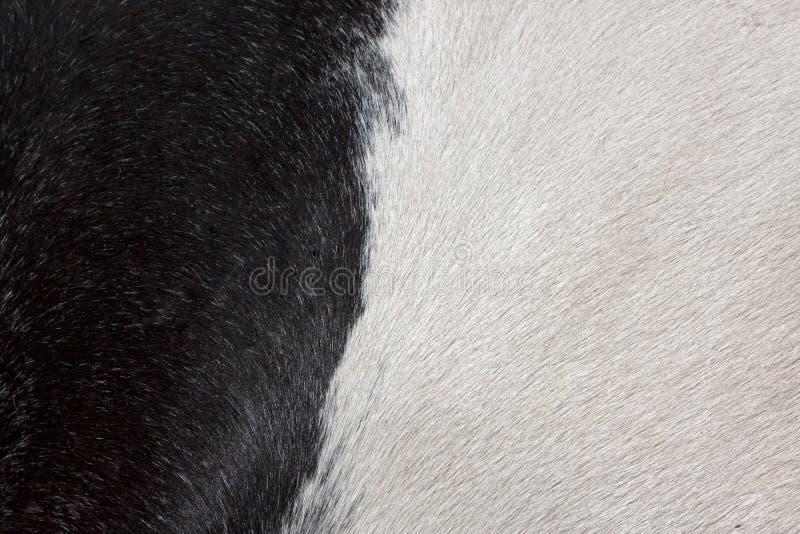 Zwart-witte bontachtergrond stock afbeelding