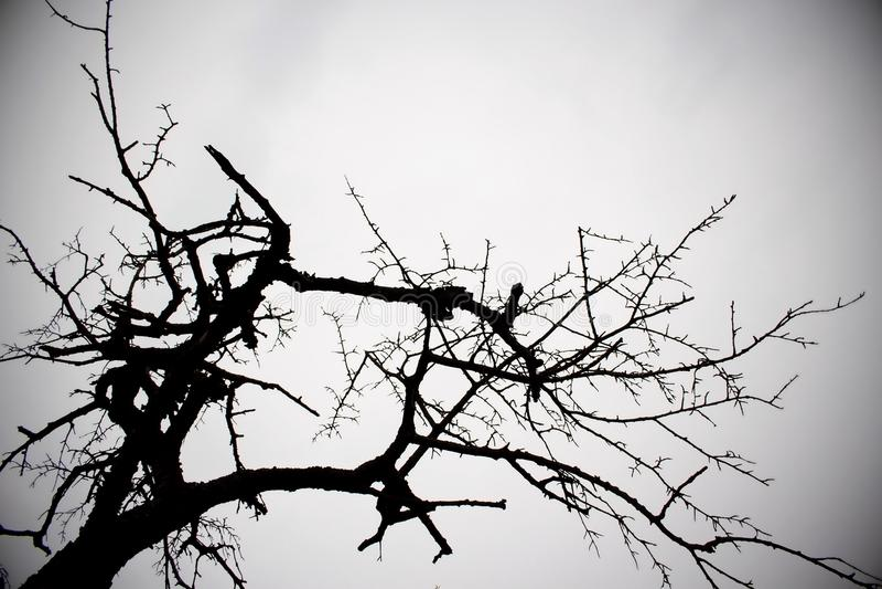 Zwart-witte boom royalty-vrije stock fotografie
