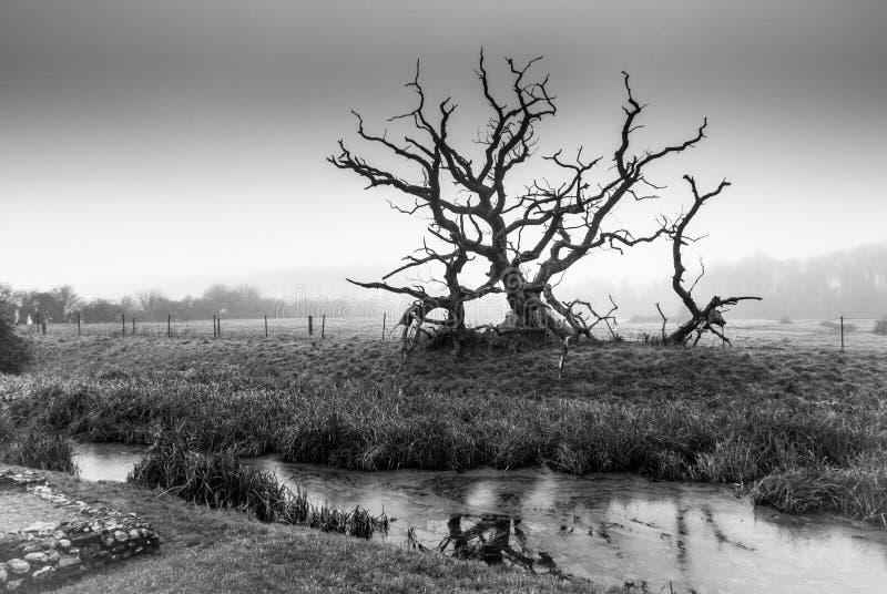 Zwart-witte coountrysidescène van meer en een onvruchtbare boom stock afbeeldingen