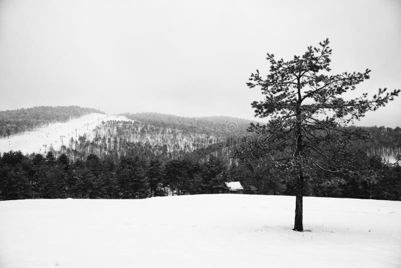 Zwart-witte de winter van het Divcibarelandschap royalty-vrije stock afbeeldingen