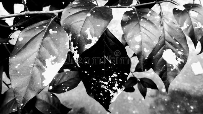 zwart-witte die bladeren met verf worden geploeterd royalty-vrije stock fotografie