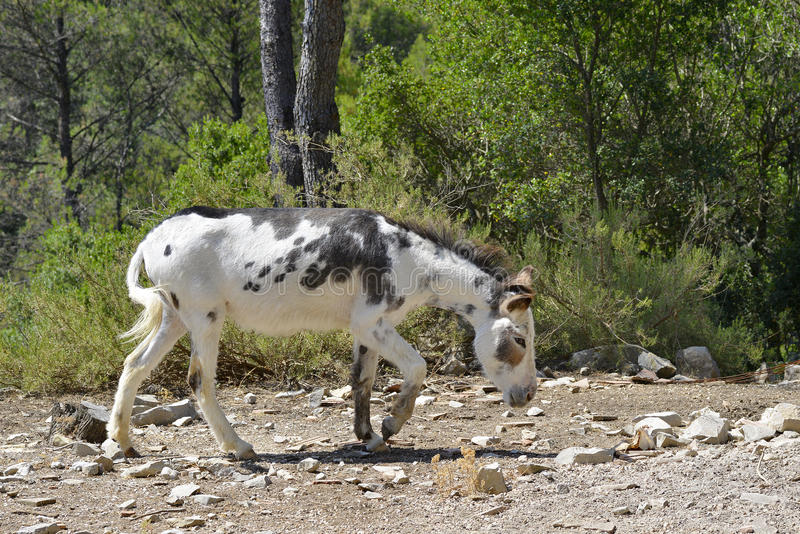 Zwart-witte ezel stock foto's