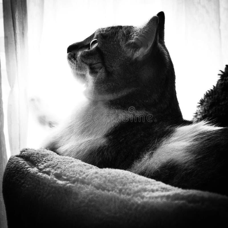 zwart-witte foto die een kattenrestin afschilderen royalty-vrije stock afbeeldingen