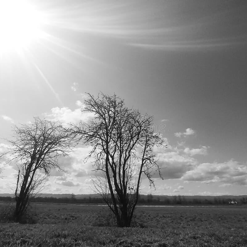 Zwart-witte foto's van bomen die samen op gebied komen royalty-vrije stock foto