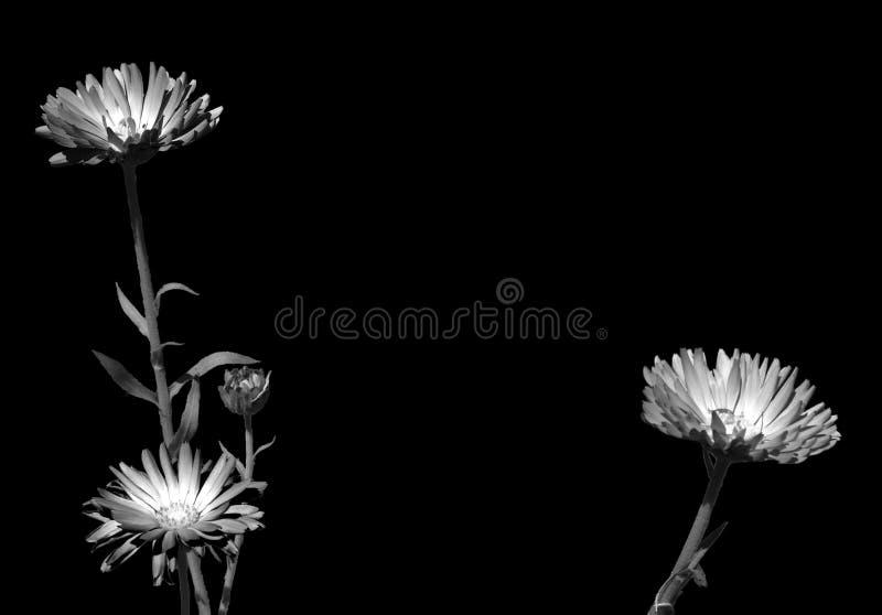 Zwart-witte foto van drie installaties en hun stammen, met mooie fluorescente bloemen royalty-vrije stock afbeeldingen