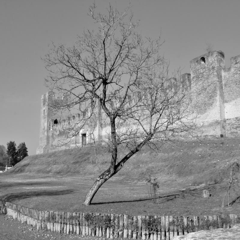 zwart-witte foto van een boom met de oude muren van een middeleeuwse stad achter het Castelfranco Veneto, Itali? royalty-vrije stock foto's