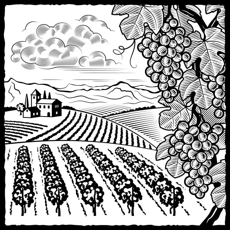 Zwart-witte het landschap van de wijngaard vector illustratie