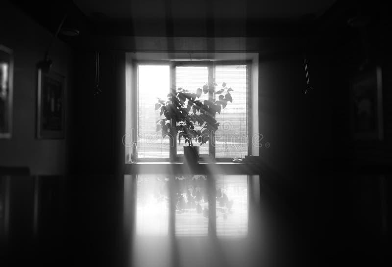 Zwart-witte installatie dichtbij venstersachtergrond royalty-vrije stock foto's