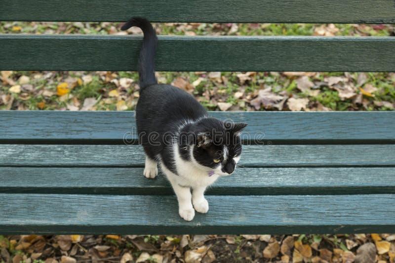Zwart-witte kat bij de bank in het park stock afbeeldingen