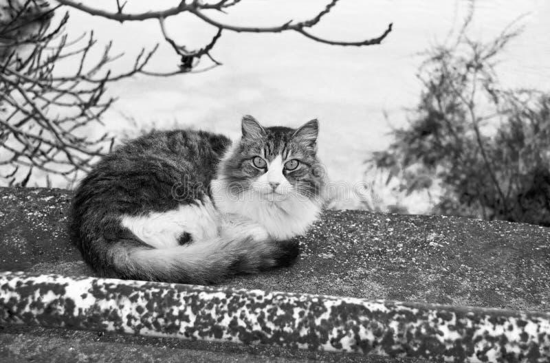 Zwart-witte kat in de aard stock foto